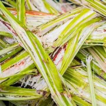 Paper canya de sucre